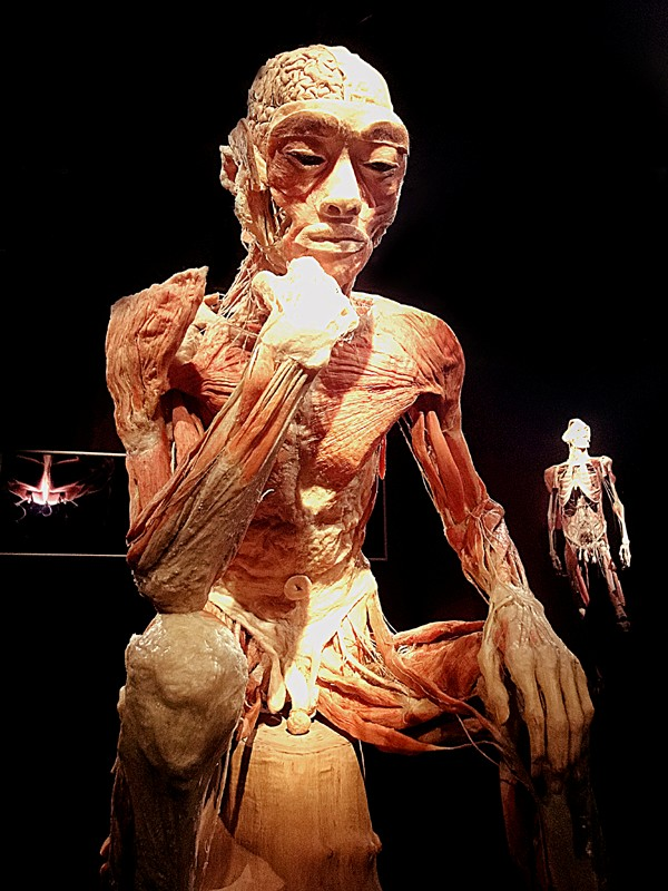 expo human body1-1