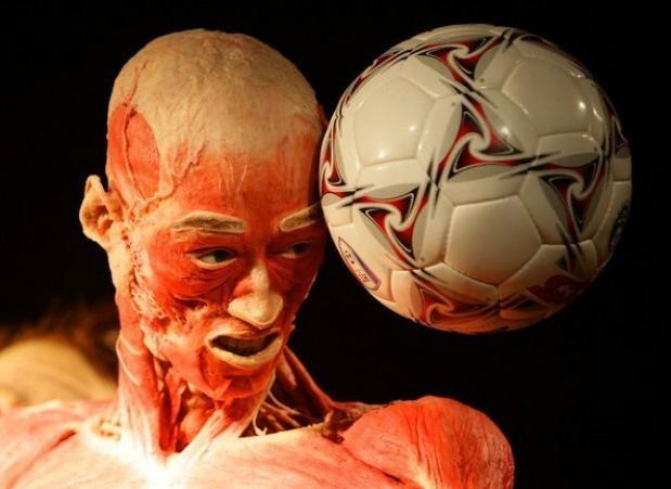 the-human-body-exhibition-torino