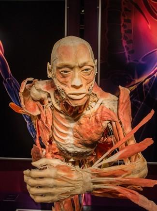 the-human-body-exhibition---torino_325x435